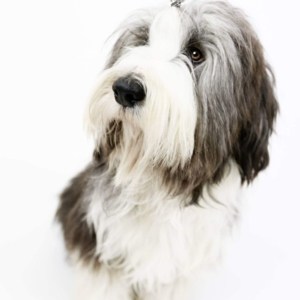 Bachbloesem voor huisdieren
